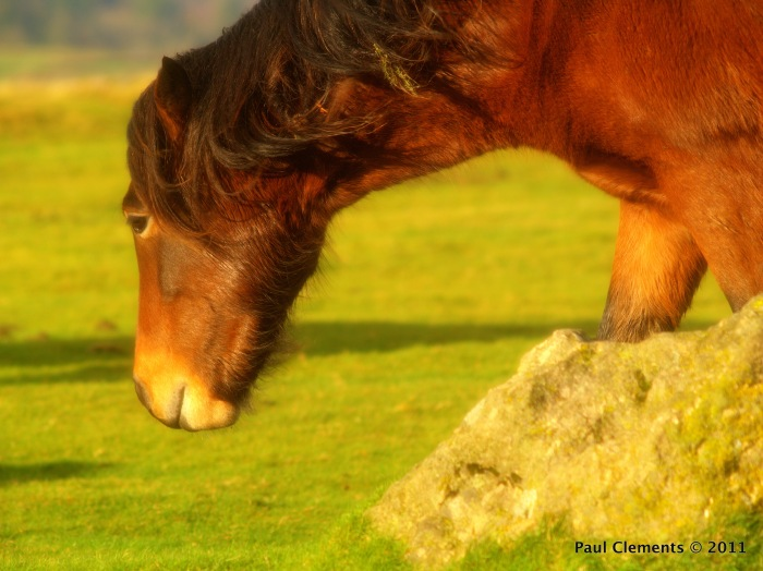Pete the Pony